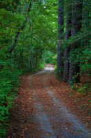 Down the Path by DonLeo85