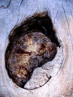 Close-up Knot in wood by timelessjourney