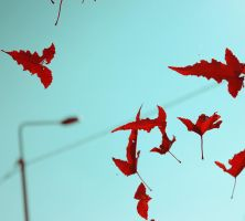 where to fly away autumn leaves by Yusik