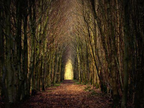Tunnel arbres 2 by Euphoria59
