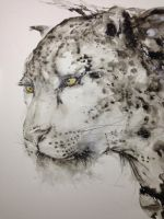 Snow leopard by huatunan