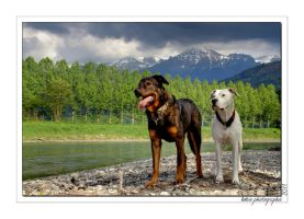 my dogs in nature by Misslulu07