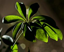 Leaves and a Light Beam by Suinaliath