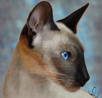 Siamese by Auldale