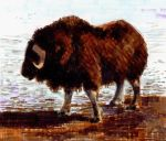 Musk ox by disegno07