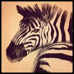 zebra by Daydreamer0612
