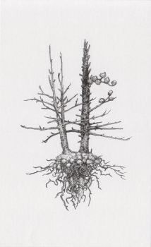 Two Battered Shadroot Pines by asylumseaker