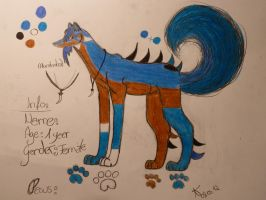 .::Chara-design for Ateyx::. by Snowstorm-wolf
