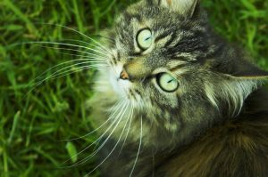 Whiskers in Circles by Aconitum-Napellus