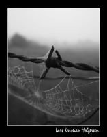 Barbed Wire by larsii