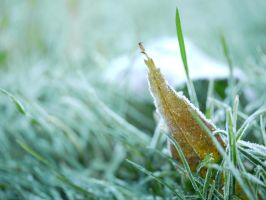 Icy grasses. by asaluiphotography