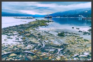 Osprey 2000 Ferry by kootenayphotos
