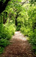 Path Through the Forest by Ithaedral