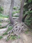 Roots by photodash