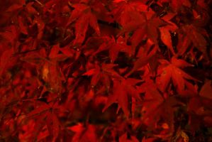 Bikan Night Time Leaves 3 by Harlequitmix