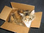 Cat in a Box by EwokJedi