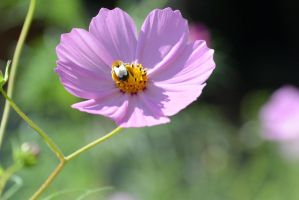 Little Pollen Packer, Bee Searching for Nectar 6 by Miss-Tbones