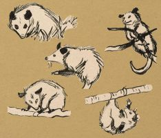 Possum brush pen sketches by solitaryzombie