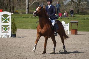 Chestnut Horse - Show Jumping stock - 11.15 by MagicLecktra