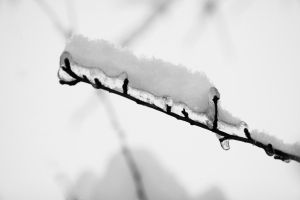 Frosty's Comb by Casperium
