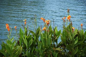 Flowers by the River by SimonArty