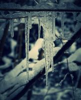 Icicles by SparrowR