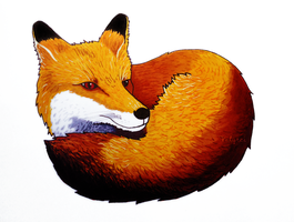 Red Fox Curled Up for a Nap by Valyrei