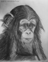 Monkey drawing (dessin singe) by lyyy971