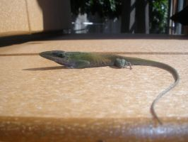 Green Anole 3 by TroikAnia