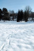 Snowscape Stock 1 by Sed-rah-Stock