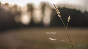 Soft Wheat by zipfileART