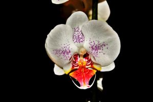 Mouth of an Orchid by averyskees