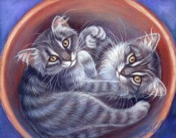 Potted Pair of Tabby's by carefulwhatyawishfor