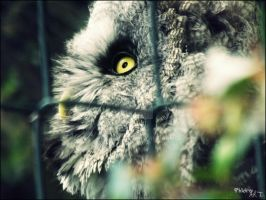Owl I lOwve you.. by Phlo-Ra