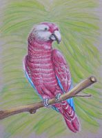 red parrot by 123thuraya