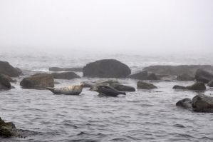 marine seals by mariall