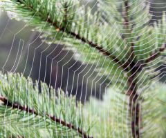 spiderweb 2 by KariLiimatainen