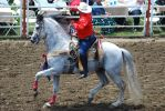 Fleabitten Gray Gaited Horse by xxtgxxstock