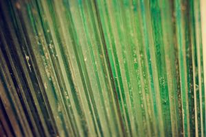 Texture_1 by EK-StockPhotos
