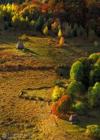 Autumn colors in Apuseni Mountains 9 by adypetrisor