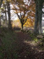 The small path by Angeliqueperrin