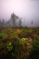 Morning Mist VII by CalleHoglund