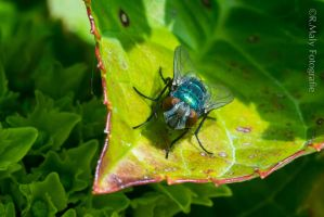 The fly by TLO-Photography