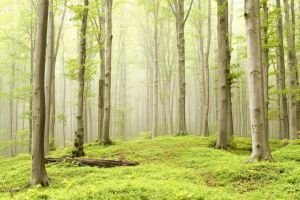 Enchanted spring forest by MICHAELSTEELE