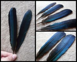 White-Cheeked Turaco Tail Feathers by CabinetCuriosities