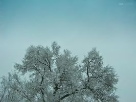 Snowing on a Tree by thenonhacker