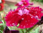 Rain Soaked Flower by robinchanop
