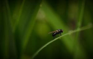 The Fly by Mizth