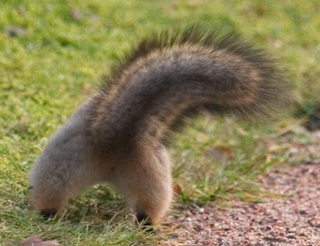 Squirrel pants by TomiTapio