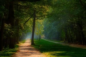 Fairy park by tomsumartin